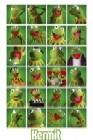Kermit Collage
