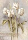 Botany ll