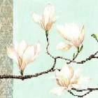 Magnolias On Turquoise