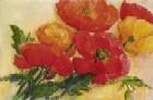 Splendid Poppies