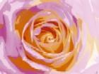 Rose Variation l