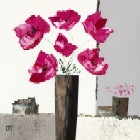Pivoines Roses l