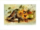Garden Wrens
