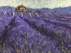 Lavender Fields l