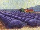 Lavender Fields II