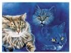 Cats l