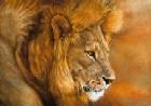 Lion Du Serengeti