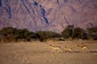 Negev Desert I