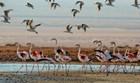Flamingo In The Negev