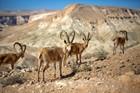 Negev Desert II