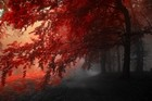 Red Forest Mist