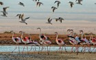 Flamingo In The Negev