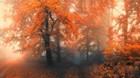 Orange Forest Mist