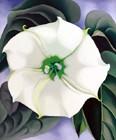 White Flower No. 1, 1932