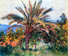 Palm Tree at Bordighera