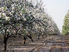 Beutiful Plantations Of Israel