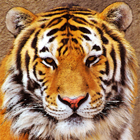 Tiger Face I