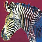Zebra II