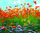 Flower Square