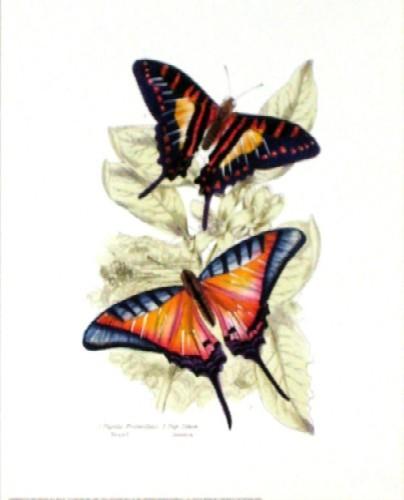 Butterflies ll
