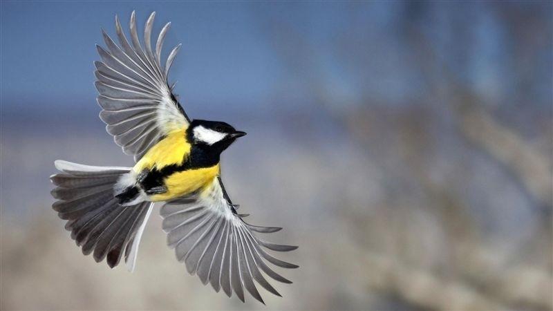 Bird Still Flying