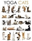 Cats Compilation