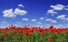 Flower Field Under Blue Sky