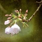 Spring Flower Textured