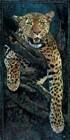 Masai Mara, Leopard