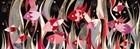 Poissons Rouge Et Gris